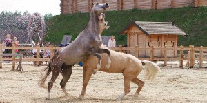 Породистих коней з усього світу  покажуть у «Парку Київська Русь»